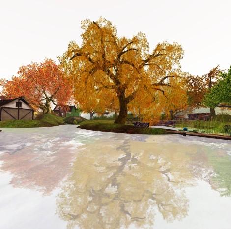 that tree.jpg